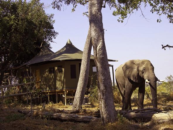Little Vumbura, Elephant