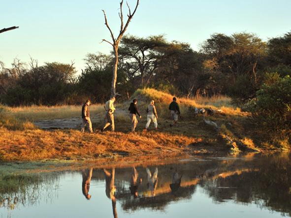 The Hide, walking safari