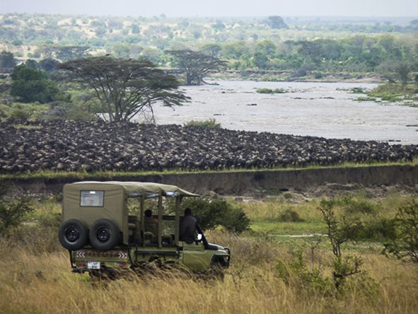 The sight of a thousand and one wildebeest perched atop the river banks is one of the highlights of the Great Migration.