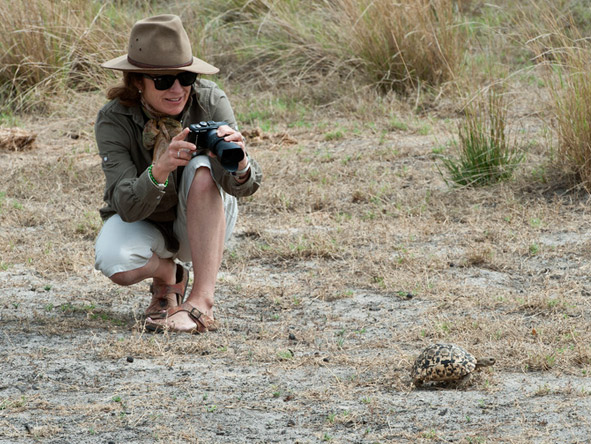 A guest photographs a tiny leopard tortoise at Jacana Camp in the private Jao Concession in the Okavango Delta.