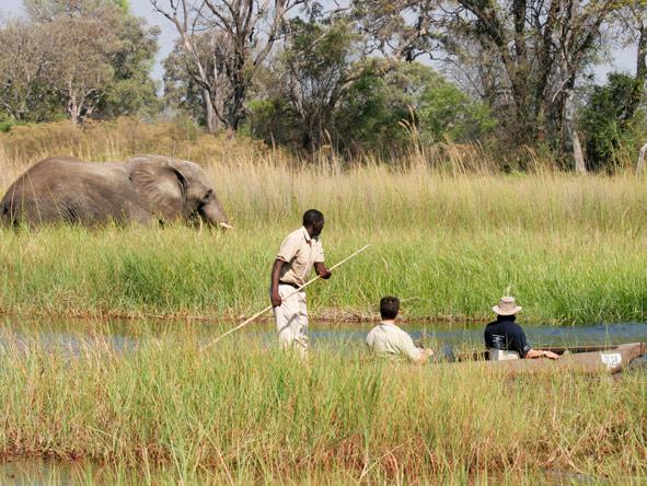 Okavango Delta, Elephant