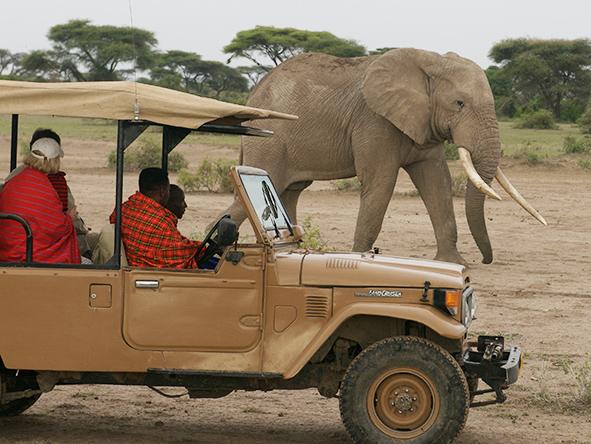 East Africa Elephants