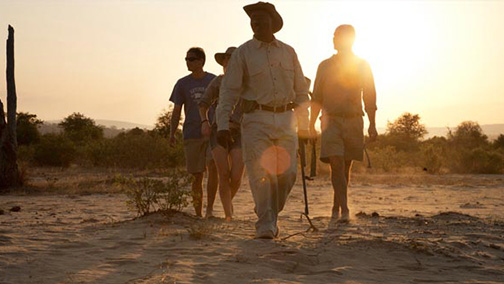 Private Guided Safaris - Tours & Safaris