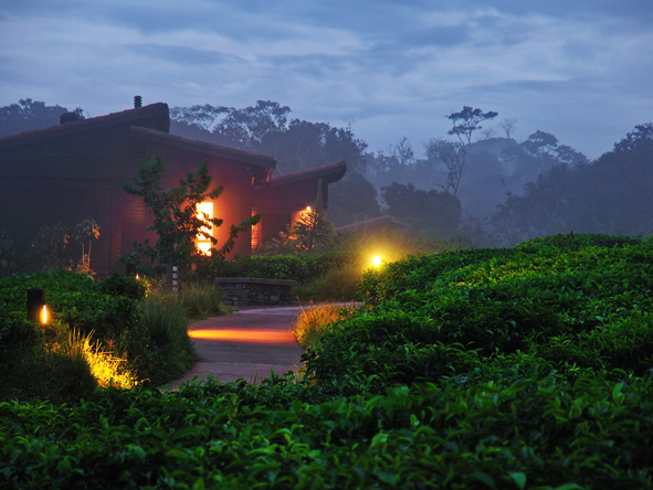 Hyungwe Forest Lodge, Tea Plantation