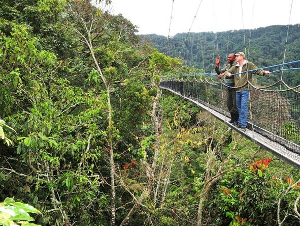 Canopy Walk, Rwanda
