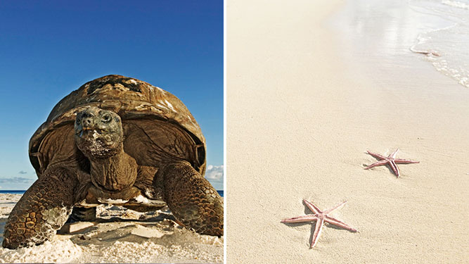 Mauritius vs Seychelles: Turtles & beach life