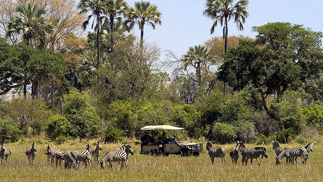 Why We Love Conservancies - on safari