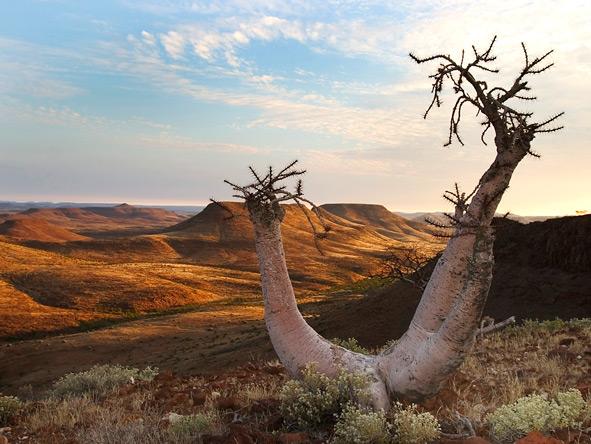 Palmwag Conservancy, Desert plants
