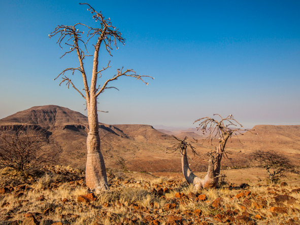 Desert Plants, Damaraland