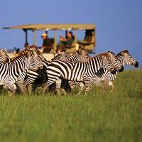 Our Top 10 Conservancies - Singita Grumeti