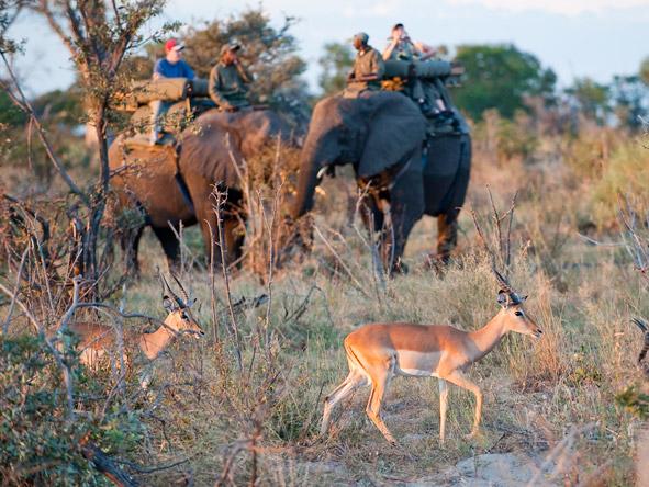 Elephant-back rides at Abu Camp Botswana