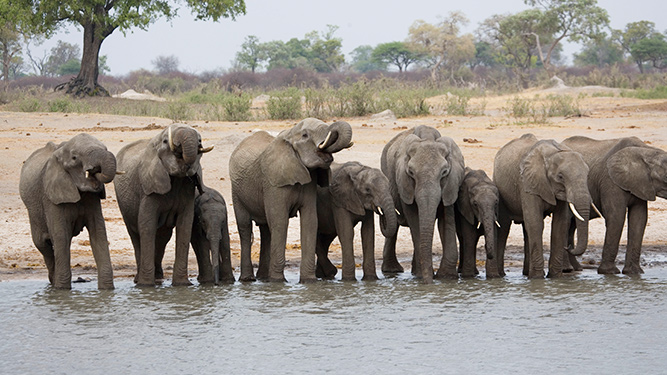 Best African Safari Tours - Private Guided Botswana & Zimbabwe