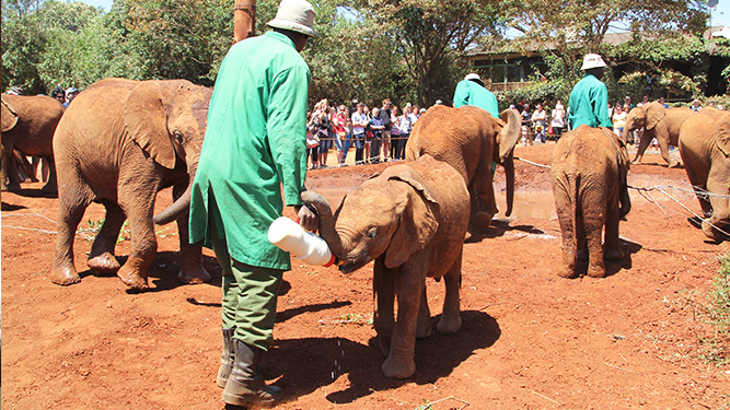 How to have ethical animal encounters - Daphne Sheldrick