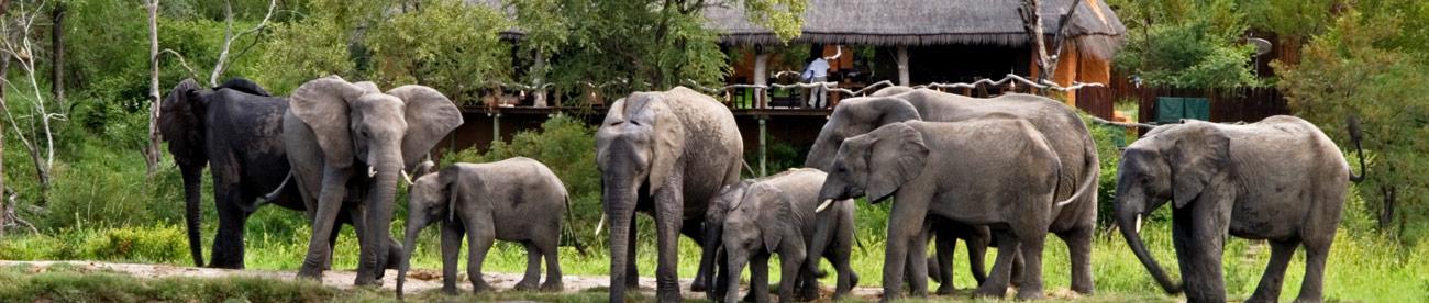 Simbambili, elephants
