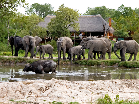 Sabi Sands private reserve, waterhole