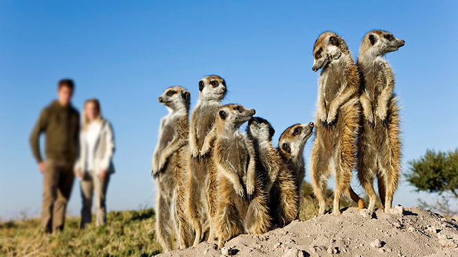 How to have ethical animal encounters - Meercats