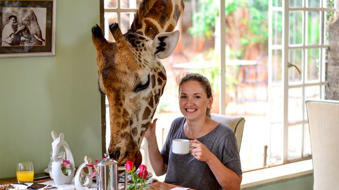 How to have ethical animal encounters - Giraffe Manor