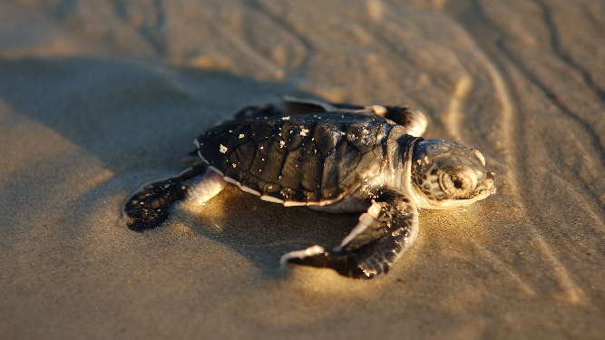 How to have ethical animal encounters - turtles