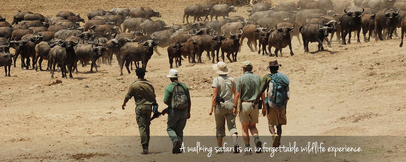 Four Alternatives to a Traditional Safari