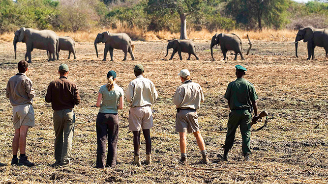 Four Alternatives to a Traditional Safari - Walking Safari