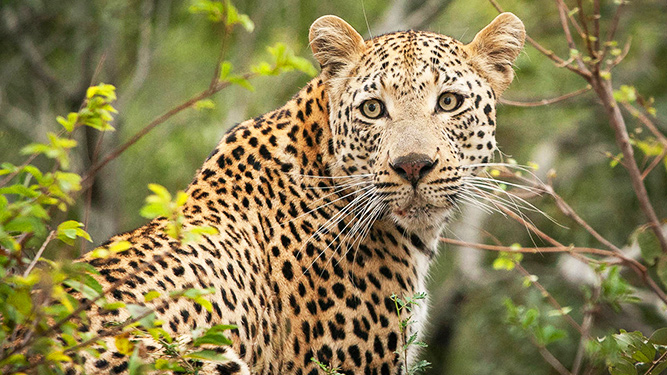 Top 10 Reasons to Visit South Africa - wildlife