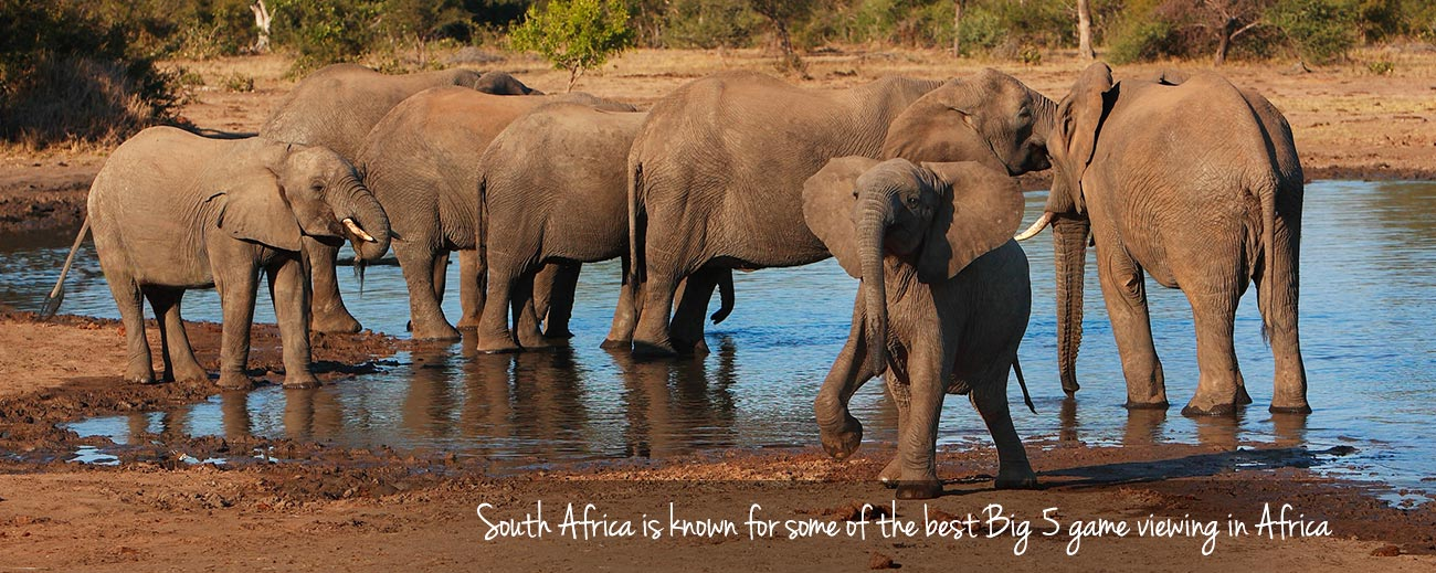 Top 10 Reasons to Visit South Africa