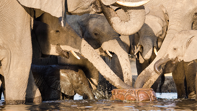 Top 5 Chobe Experiences - The Big Thirst