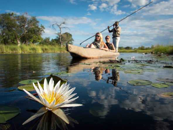 Okavango Delta, Water Lillies