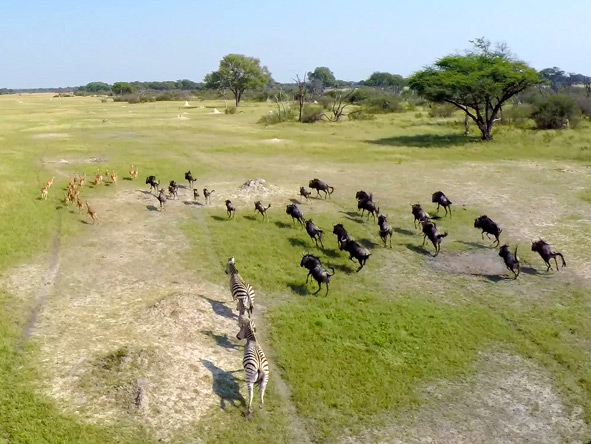 Impala, Wildebeest, Zebra
