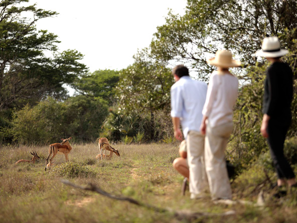 guided walking safari, Phinda
