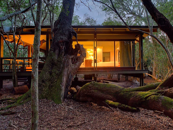 Phinda Forest Suites