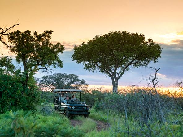 Madikwe sunset safari