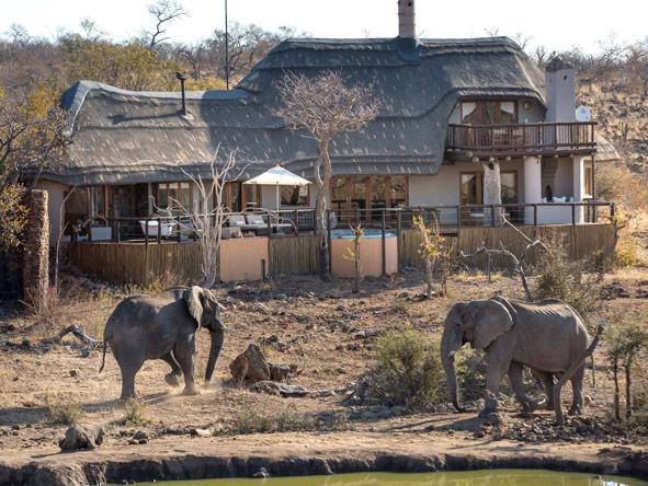 Elephants, madikwe