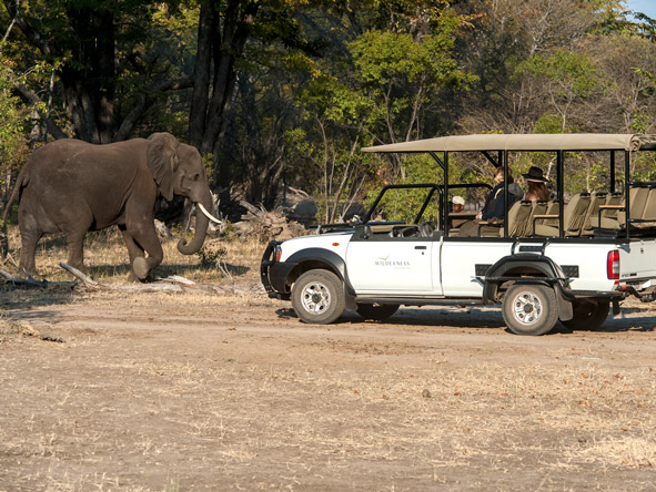Safari vehicle, elephant