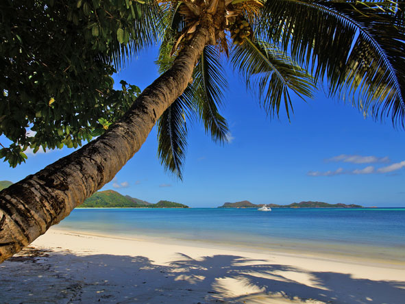 palm trees on Anse Gouvernement beach