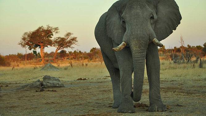 Zimbabwe Rises Again - Hwange National Park