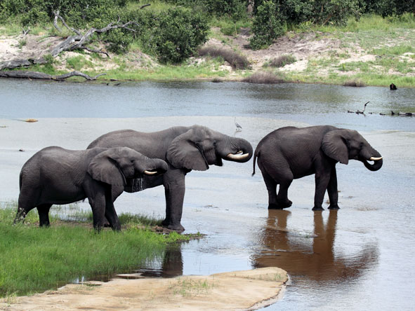 3 elephants at the watering hole