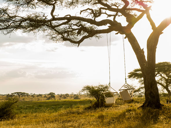 Tree Hammocks, Namiri Plains