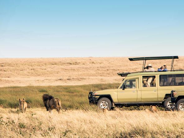 Lions, Eastern Serengeti