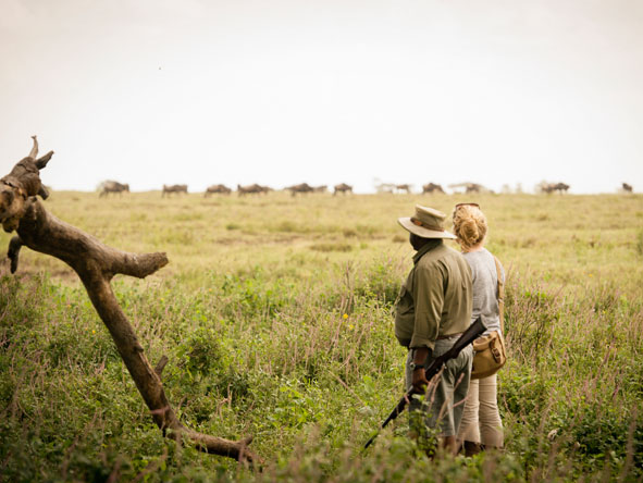 guided safari walk in the serengeti