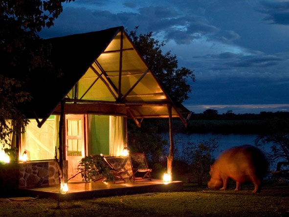 Mvuu Camp, Hippos
