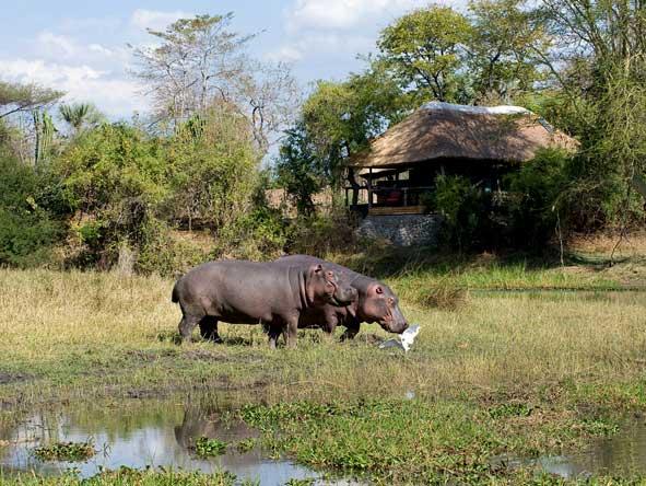 hippos, Malawi