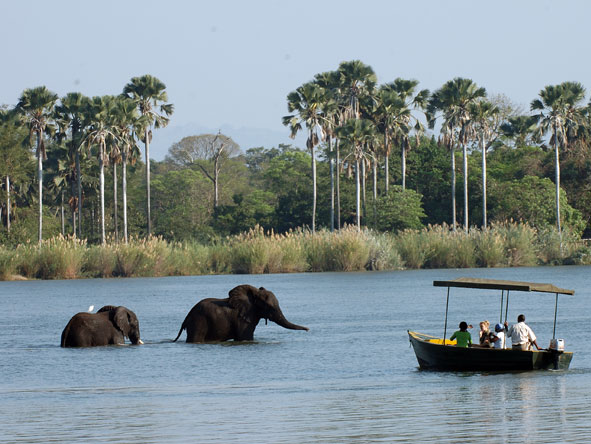 elephants in the shire river, Malawi