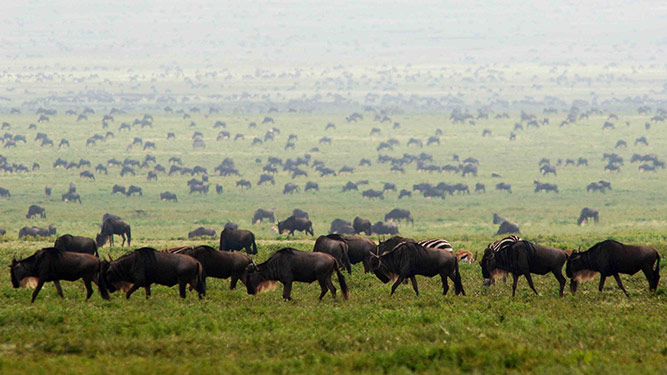 Top 10 Inspirational Places - Serengeti
