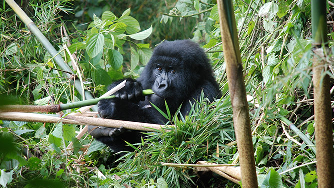 Top 10 Inspirational Places - Bwindi