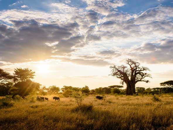 boabab tree, zimbabwe