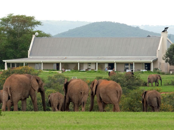 Elephants in front of River Bend Lodge
