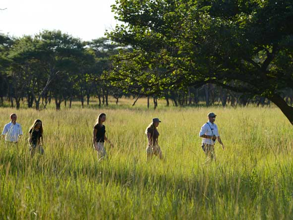 guided bush walk, zambia