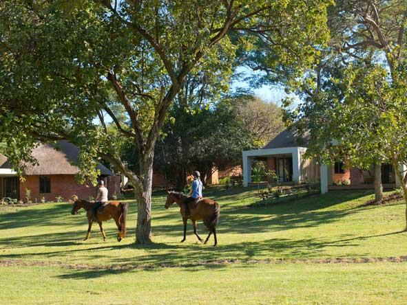 A horseback safari