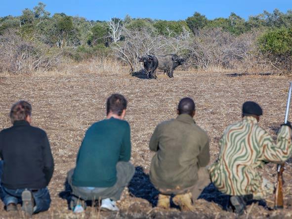 walking safari, luwi bush camp